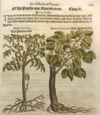 From A nievve Herball or Historie of Plantes . . . Classmark: CCA.47.196